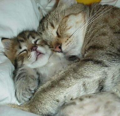 Cerita Kehidupan Kucing « FaithfuL's Blog